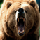 Bear Effects - The Best High Quality Ringtones, Sounds and So Much More!